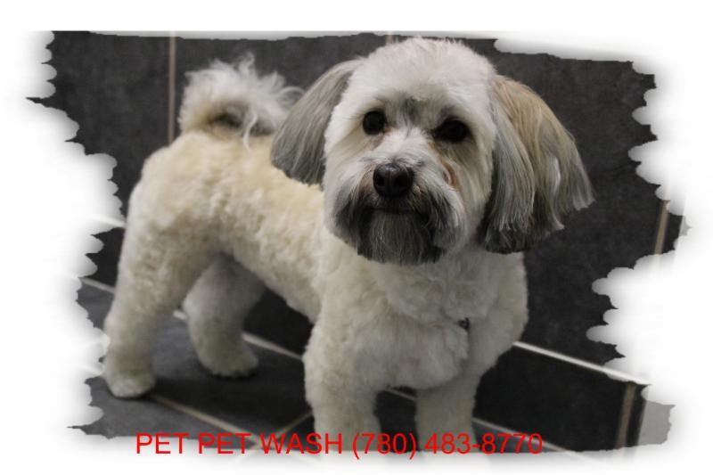 Pet Pet Wash Professional Dog Grooming Ltd - Photo 5
