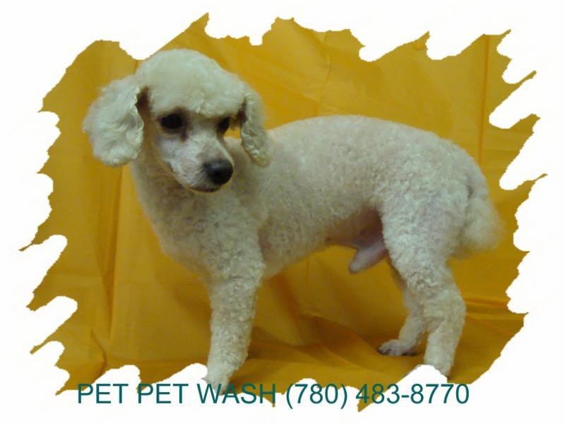 Pet Pet Wash Professional Dog Grooming Ltd - Photo 7