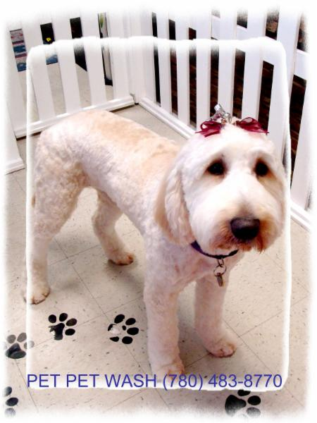 Pet Pet Wash Professional Dog Grooming Ltd - Photo 4