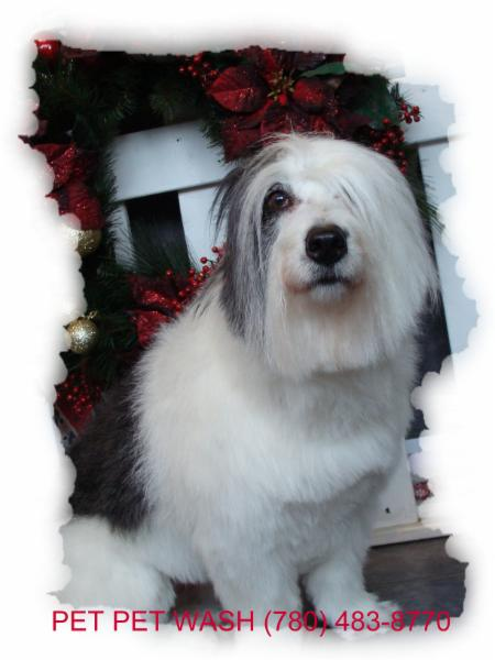 Pet Pet Wash Professional Dog Grooming Ltd - Photo 3