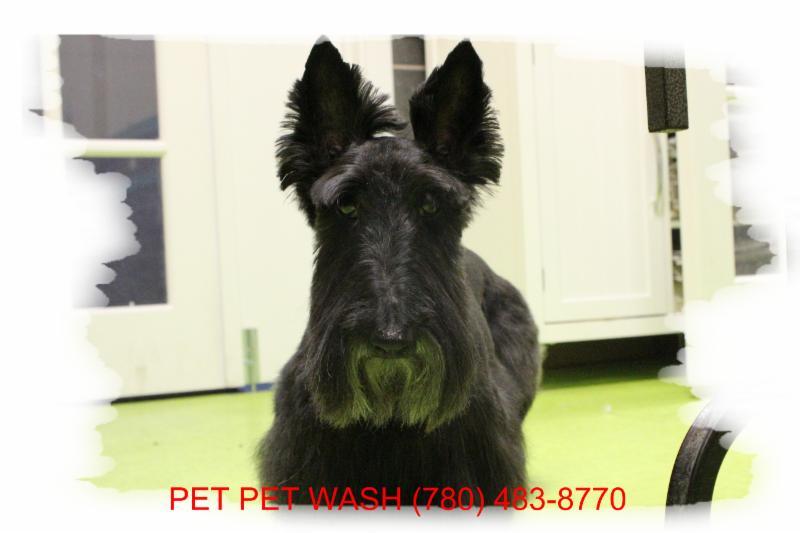 Pet Pet Wash Professional Dog Grooming Ltd - Photo 6