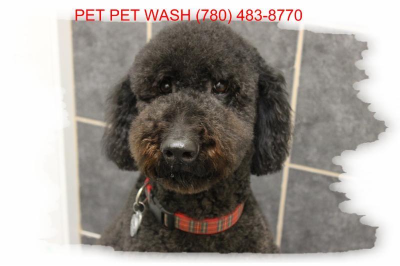 Pet Pet Wash Professional Dog Grooming Ltd - Photo 2