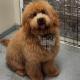 Cuttles Dog Grooming & Boutique Inc - Toilettage et tonte d'animaux domestiques - 905-264-6500
