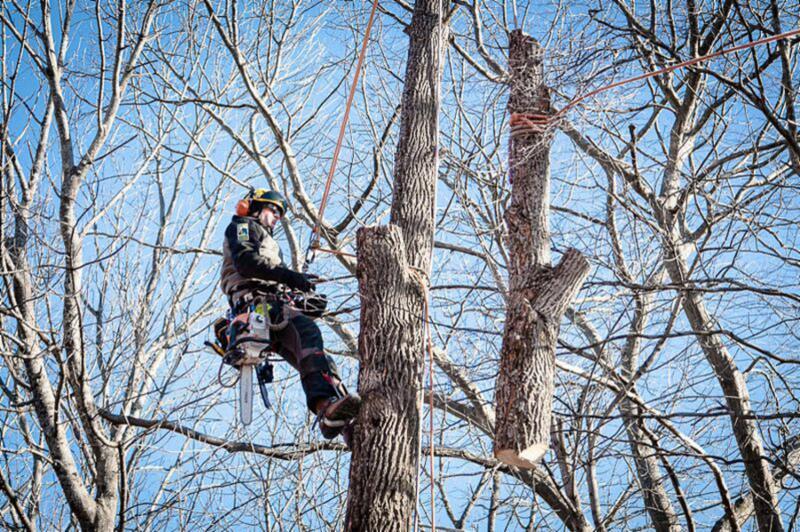 Treecologic - Photo 5