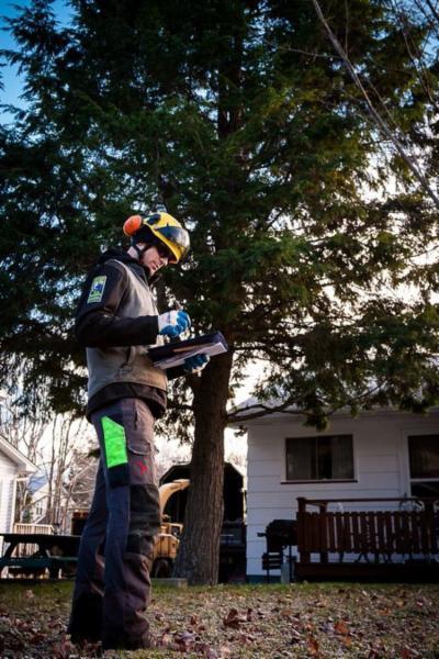 Treecologic - Photo 3