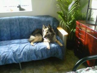 Puppy Trax - Photo 5