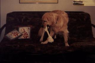 Puppy Trax - Photo 8