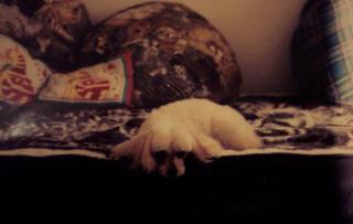 Puppy Trax - Photo 7