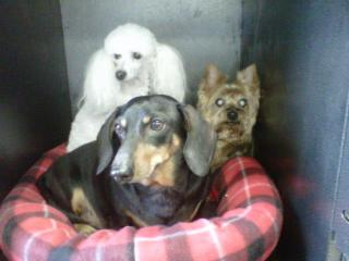 Puppy Trax - Photo 6