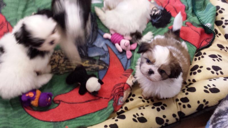 Puppy Trax - Photo 4