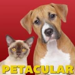 Petacular - Photo 4