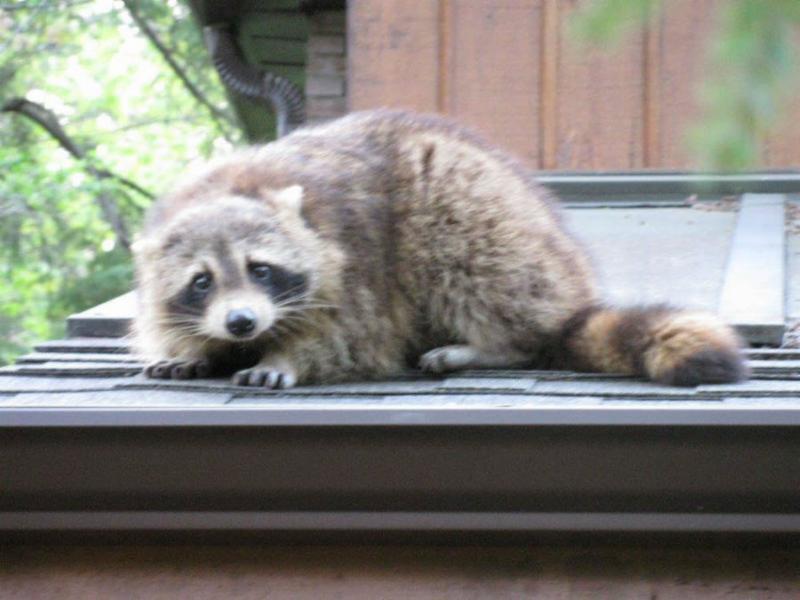ICE Pest Control & Wildlife - Photo 5