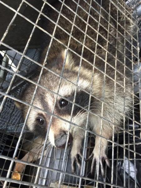 ICE Pest Control & Wildlife - Photo 4