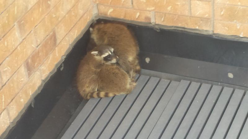 ICE Pest Control & Wildlife - Photo 1