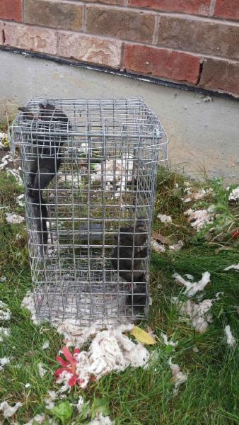 ICE Pest Control & Wildlife - Photo 3