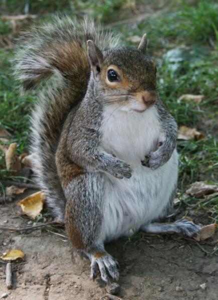 ICE Pest Control & Wildlife - Photo 7