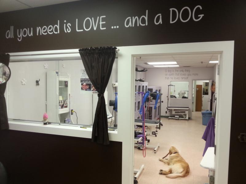 4 Paws Grooming - Photo 3
