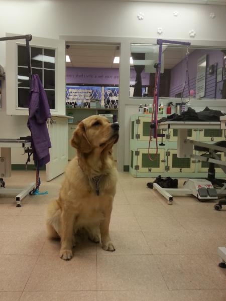 4 Paws Grooming - Photo 1