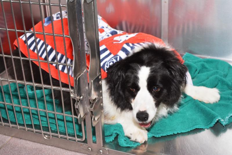 Lansdowne Animal Hospital - Photo 4