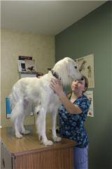 Rosebank Animal Hospital - Photo 3