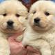 Pet Vet - Vétérinaires - 204-326-6562
