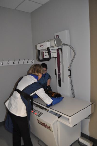 Clinique Vétérinaire Du Quartier - Photo 3