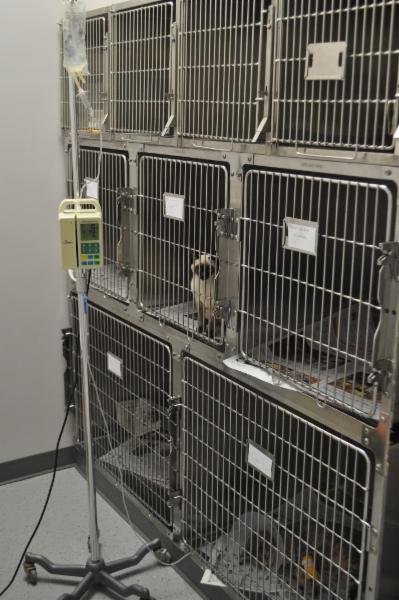 Clinique Vétérinaire Du Quartier - Photo 6