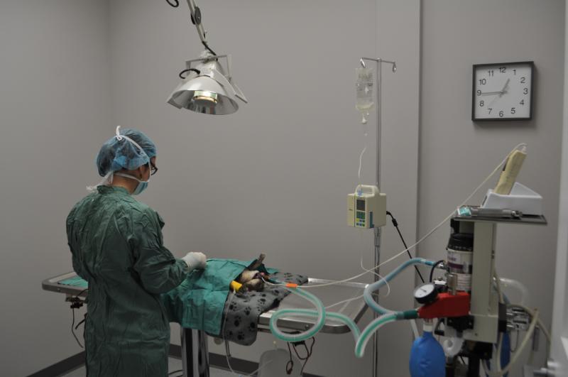 Clinique Vétérinaire Du Quartier - Photo 5