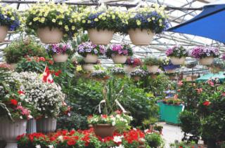Shelmerdine Garden Center Ltd - Photo 7