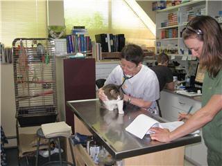 Hôpital Vétérinaire Taché - Photo 8