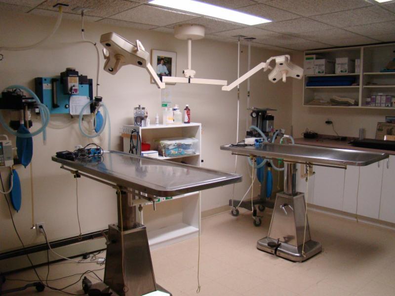 Hôpital Vétérinaire Taché - Photo 3