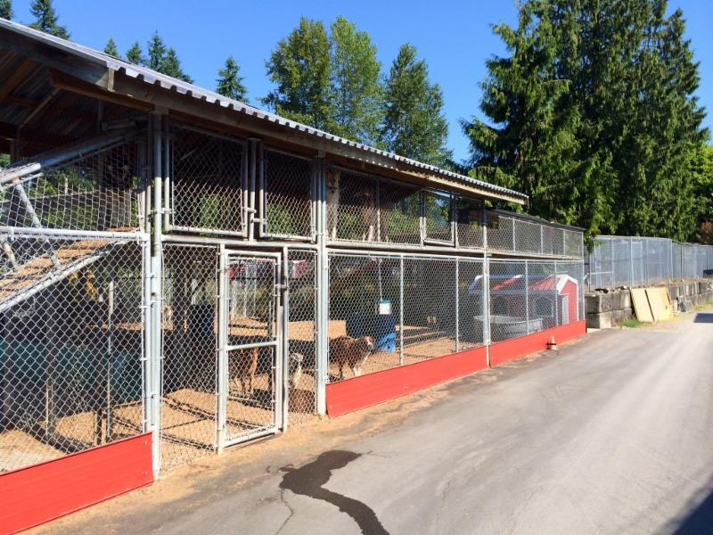 Northwest Kennels & Daycare - Photo 1