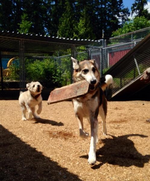 Northwest Kennels & Daycare - Photo 7