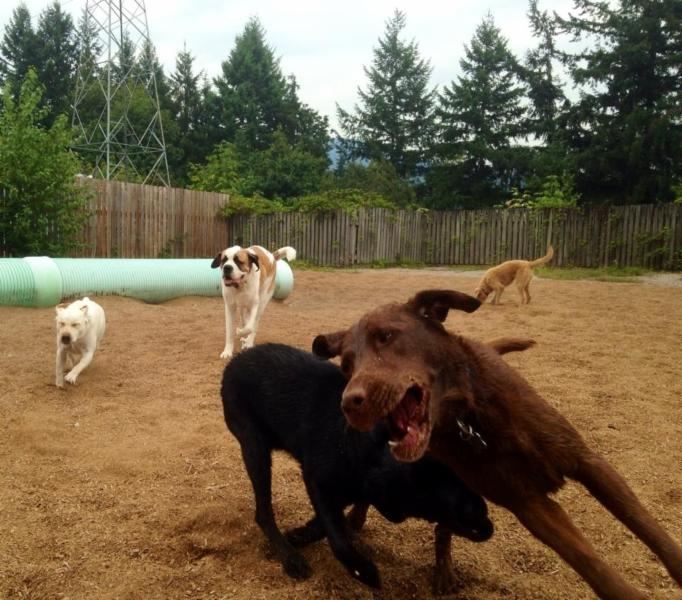 Northwest Kennels & Daycare - Photo 4
