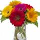 Jenny's Floral Studio - Fleuristes et magasins de fleurs - 519-332-2221