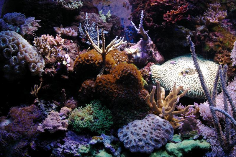 Marinescape Aquarium - Photo 6