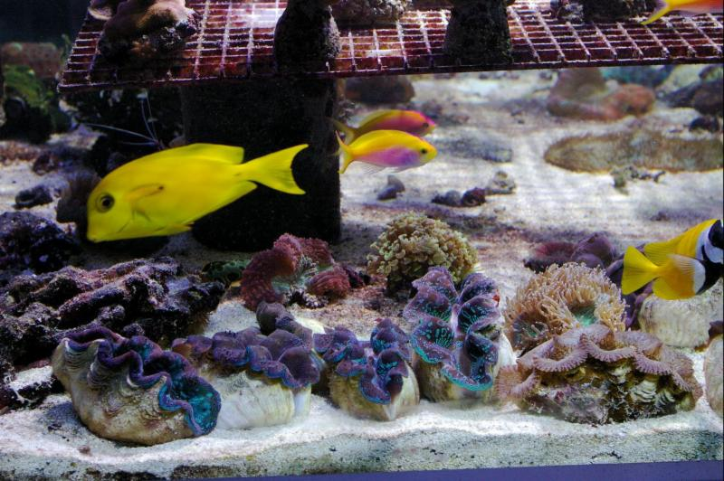 Marinescape Aquarium - Photo 5