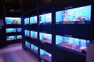Big Al's Aquarium Supercentres - Photo 8