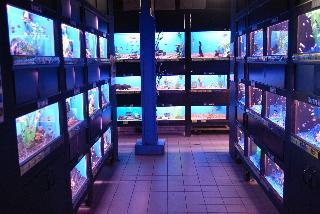 Big Al's Aquarium Supercentres - Photo 7