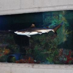 Big Al's Aquarium Supercentres - Photo 10
