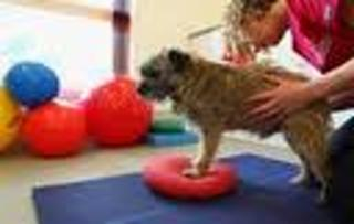 Glanbrook Veterinary Services - Photo 4