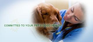 Glanbrook Veterinary Services - Photo 3