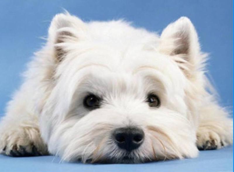 Best Mobile Pet Grooming - Photo 3