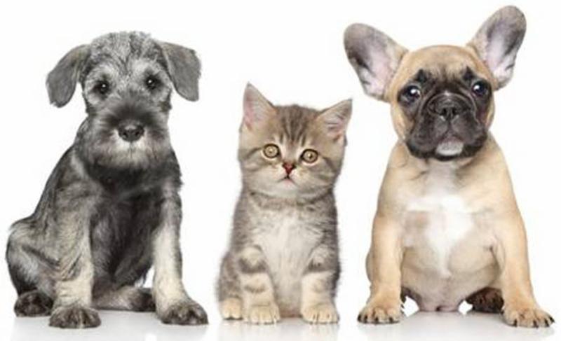 Best Mobile Pet Grooming - Photo 5