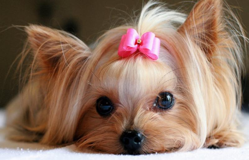 Best Mobile Pet Grooming - Photo 1