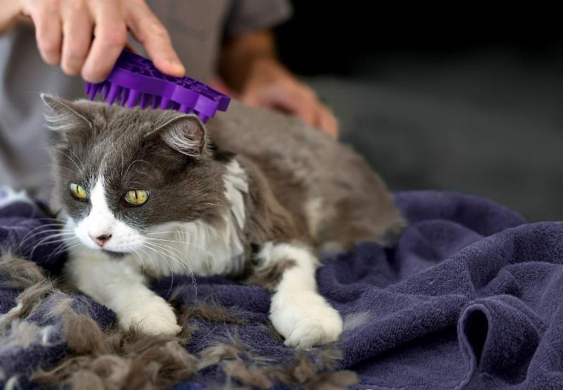 Best Mobile Pet Grooming - Photo 2