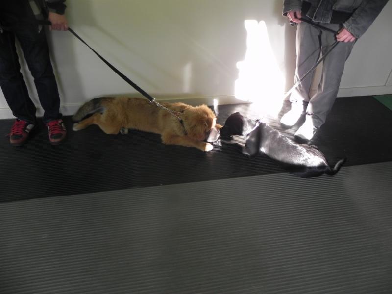 Ecole D'Obéissance Canine De Joliette - Photo 1