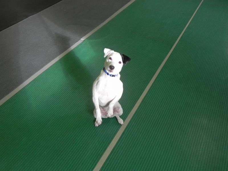Ecole D'Obéissance Canine De Joliette - Photo 6