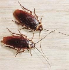 Advantage Pest Control - Photo 5