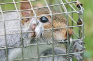 Advantage Pest Control - Photo 7